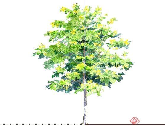 黄槐手绘2D植物SketchUp(SU)3D模型