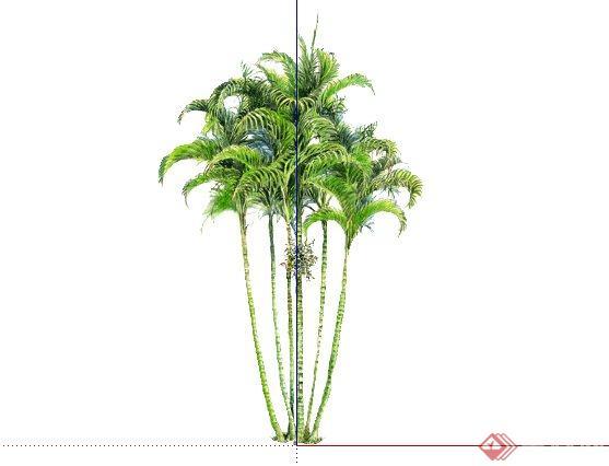散尾葵属手绘2d植物sketchup(su)3d模型