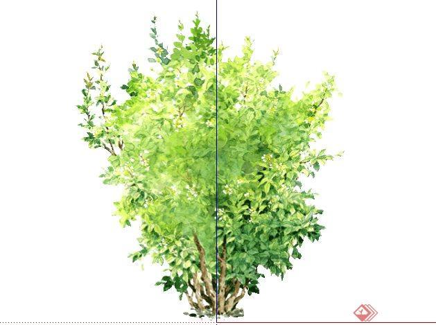 桂花手绘2d植物sketchup(su)3d模型