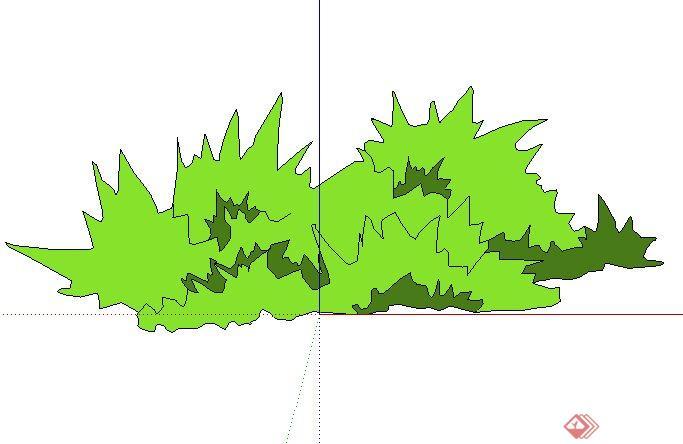 景观手绘灌木图