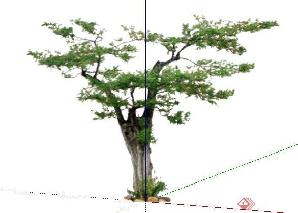 2d乔木43sketchup(su)模型