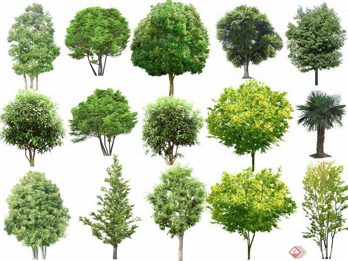 园林植物配景psd素材3