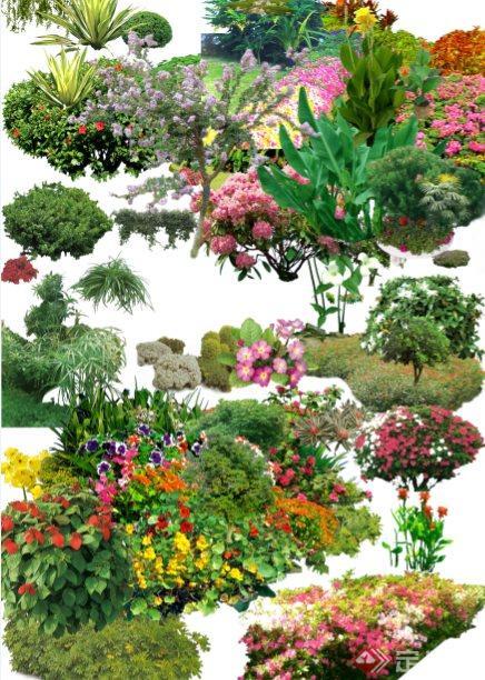建筑园林景观设计效果图花丛植物psd素材