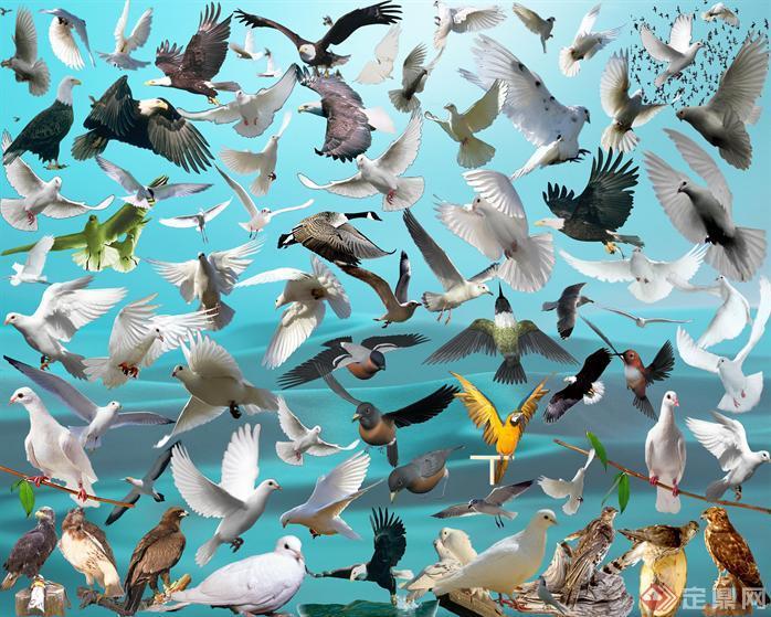 鸟类PSD素材