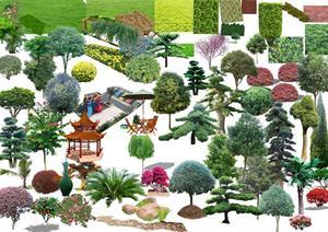 小乔木河灌木psd效果图素材 手绘园林植物人物立面效果图ps