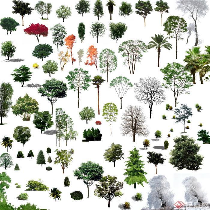 > 园林景观乔木psd效果图素材,该植物设计素材可以应用于建筑,景观