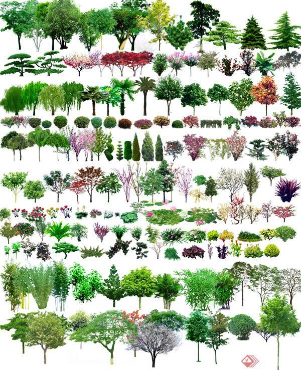 园林景观设计植物PSD素材