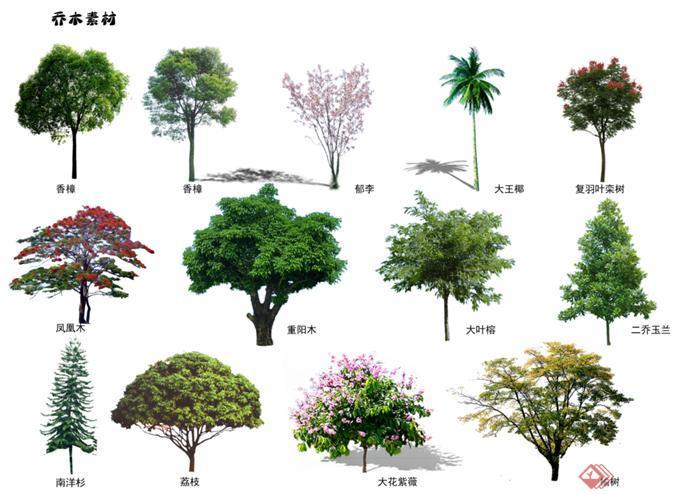 香樟,郁李,大王椰等乔木素材psd植物素材(已命名)