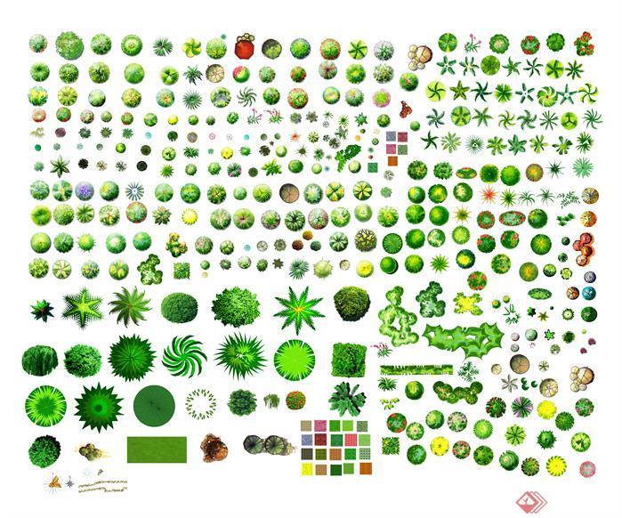 園林景觀彩平圖平面植物PSD分層素材