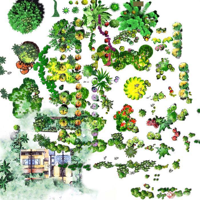 园林植物植物植物素材景观植物树木乔木