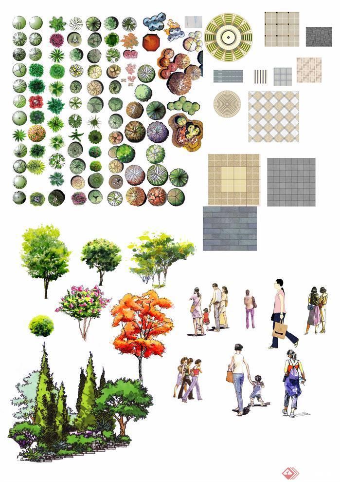 手绘园林植物平面效果图psd分层素材4