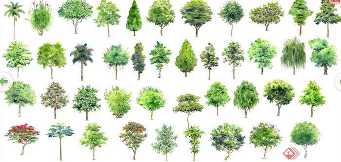 手绘立面植物设计素材(psd格式)