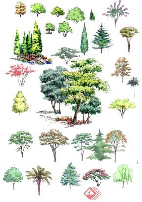 手绘园林植物立面图psd分层素材