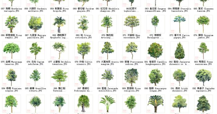 景观设计素材之手绘植物