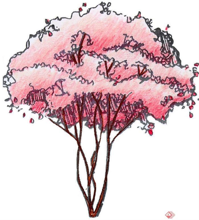 数十个园林树木手绘tif素材