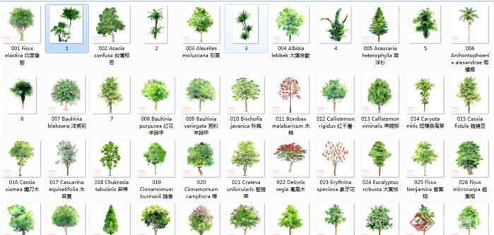 景观设计素材之手绘立面植物(含psd格式,jpg格式)