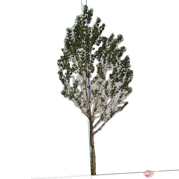 一棵番石榴树的景观植物设计su模型