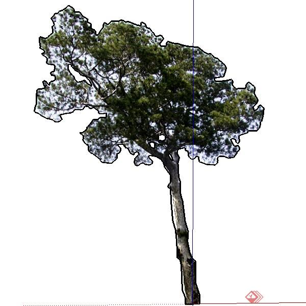 一株2d景观绿化树木su模型素材