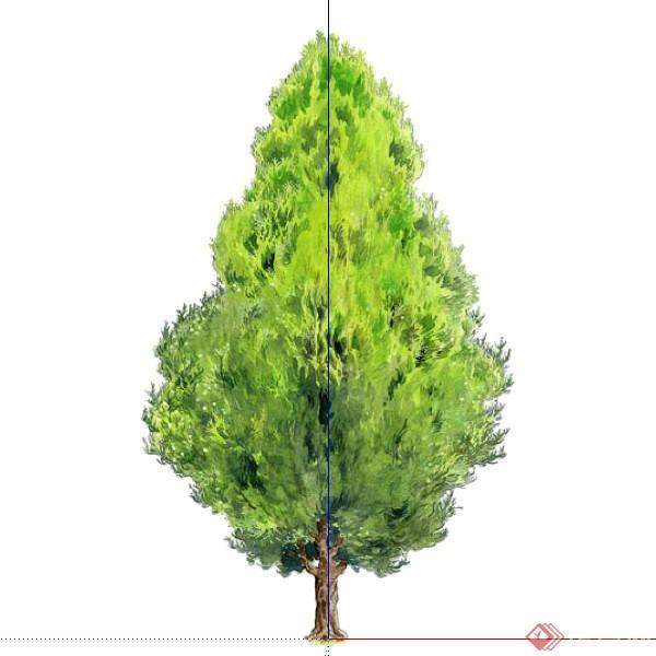 一株2d侧柏树木su模型素材