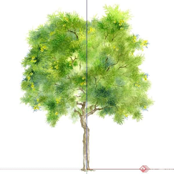 设计素材之景观植物乔木设计素材su模型32