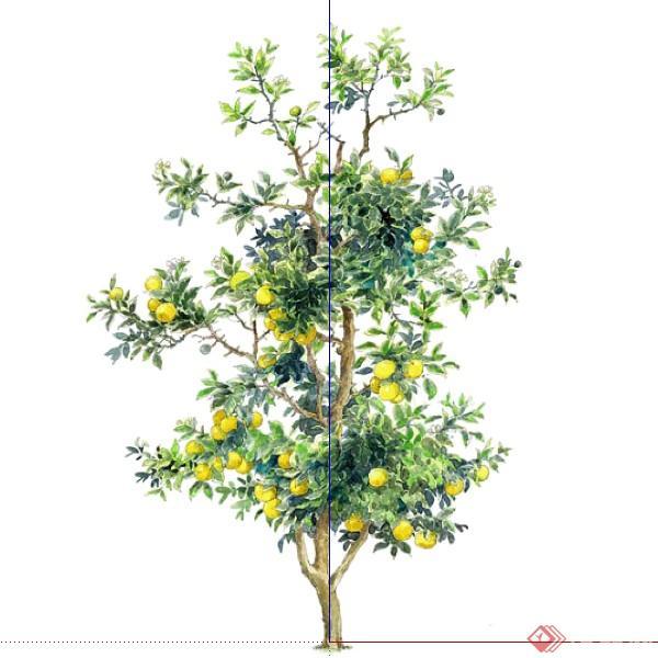 一棵桔子树的景观植物设计su模型