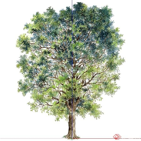 设计素材之景观植物乔木设计素材su模型46