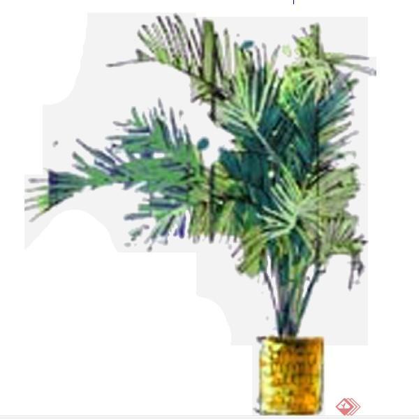 设计素材之景观植物盆景设计方案su模型