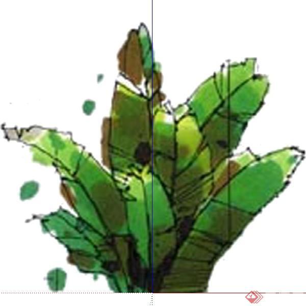 一棵芭蕉叶的景观植物设计su模型