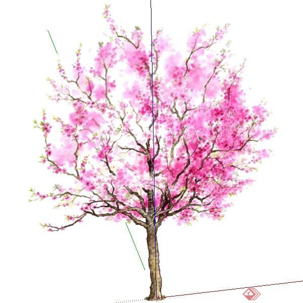 一棵开花桃树su模型素材