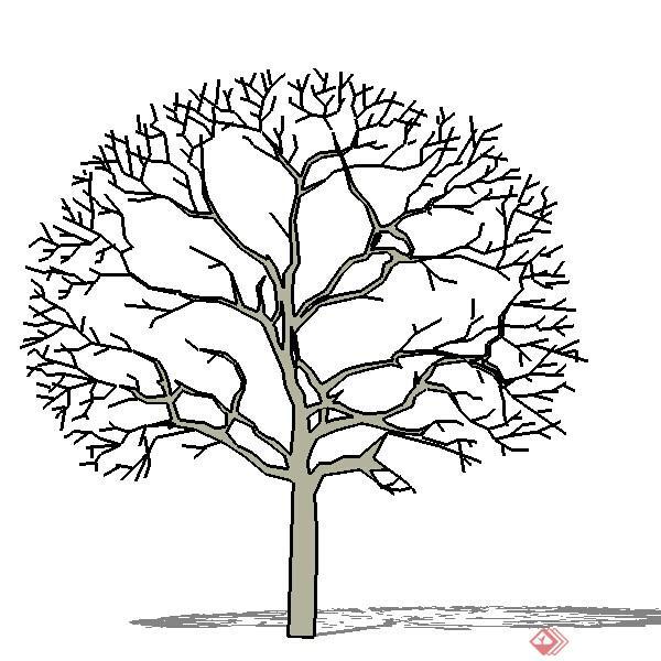 一棵冬季树的景观植物设计su模型