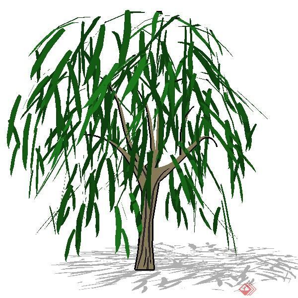 一株3d落叶的柳树植物su模型素材