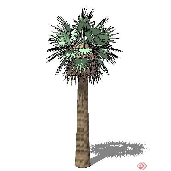 设计素材之景观植物热带棕榈树设计素材su模型70