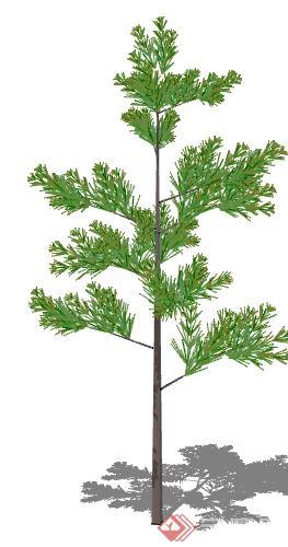 一棵常绿松树的树景观植物设计su模型