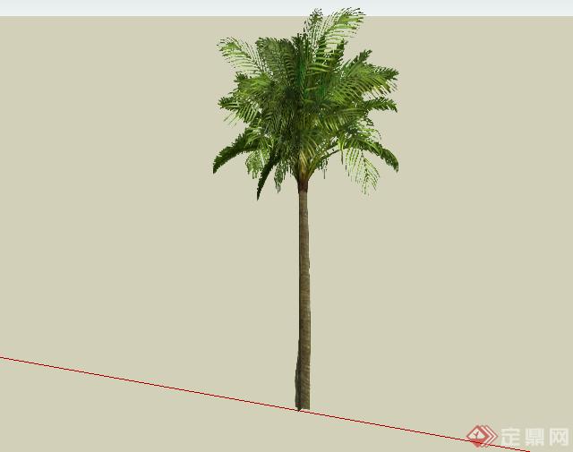 某现代风格园林植物椰子树su模型素材(1)