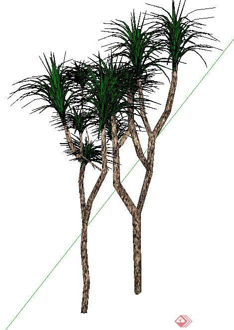 两株丝兰热带景观树木su模型素材