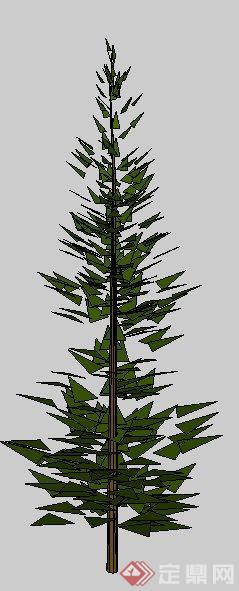 一株3D景观松树SU模型素材 2
