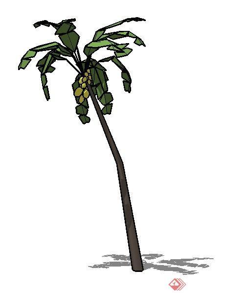 一株3d椰子树su模型素材