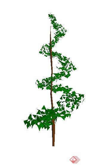 一株园林景观松树SU模型素材 3