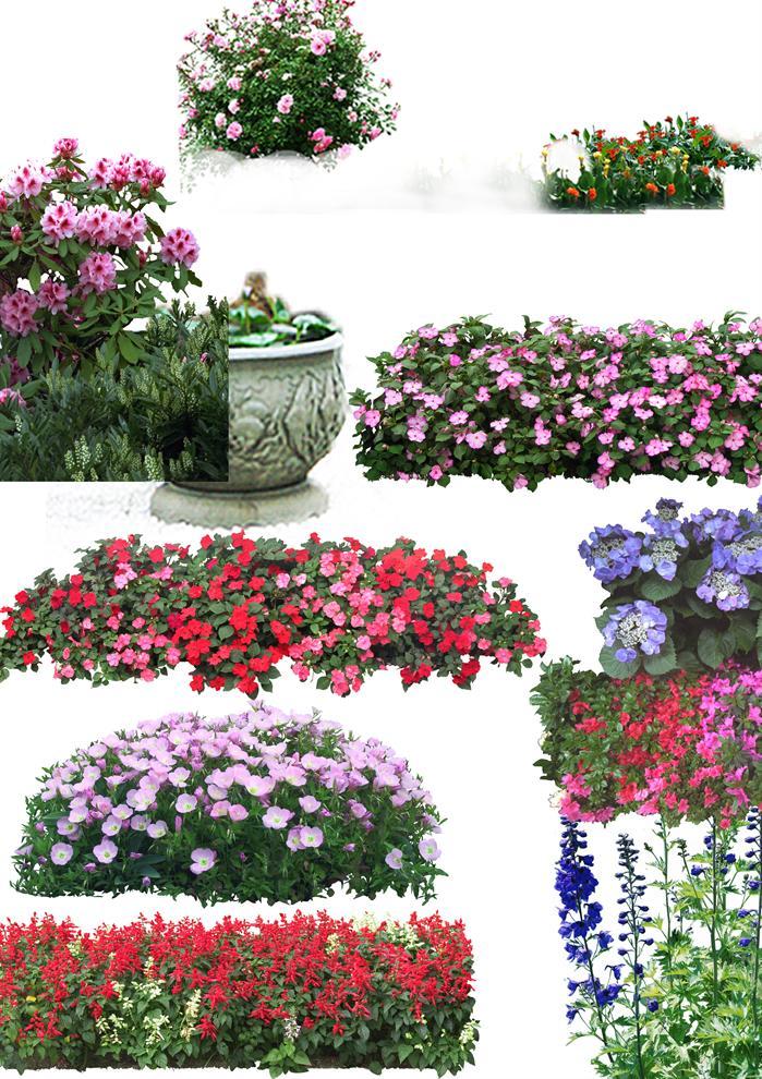 多种花卉 植物立面psd素材