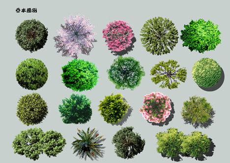 某园林植物铺平面图彩屏图设计素材psd格式[原创]