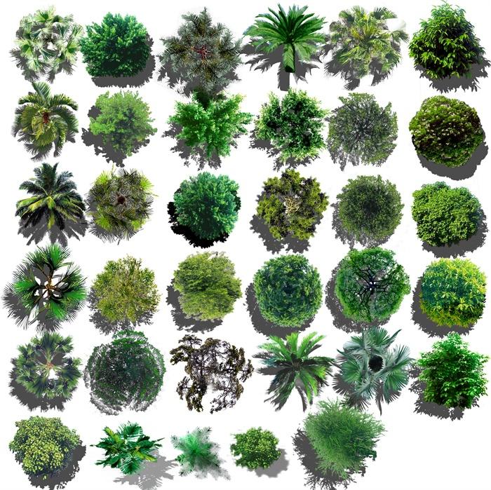 园林景观彩色平面素材之平面植物