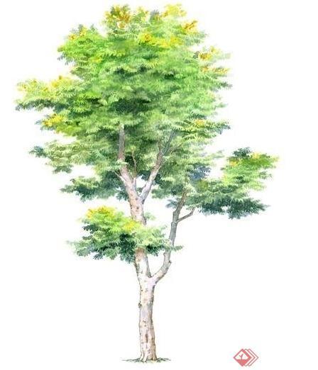 多个景观手绘植物立面ps素材
