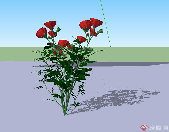 景观设计植物素材玫瑰花su模型素材(1)