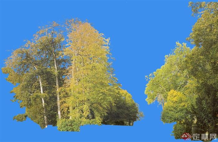 园林景观设计ps立面树素材参考