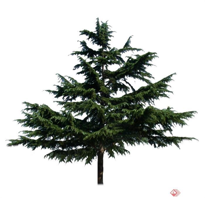 园林景观设计ps立面树素材参考-设计师图库