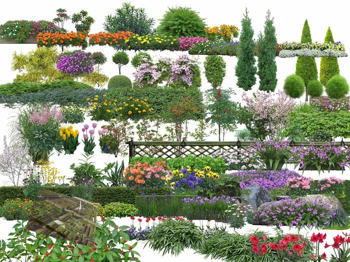 多棵景观植物psd素材
