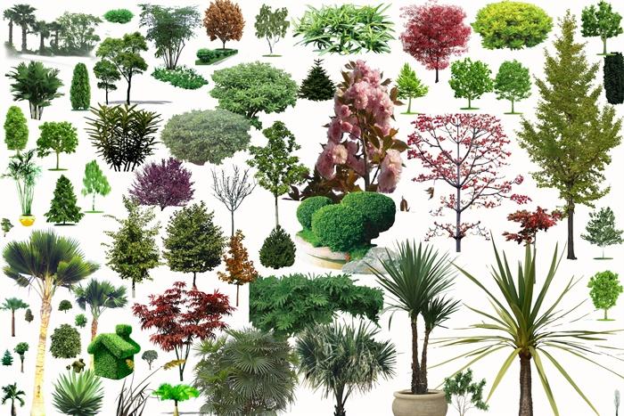多种园林景观树木植物素材psd格式[原创]