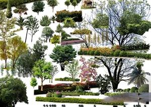 景观植物、花池、树池设计PSD效果图