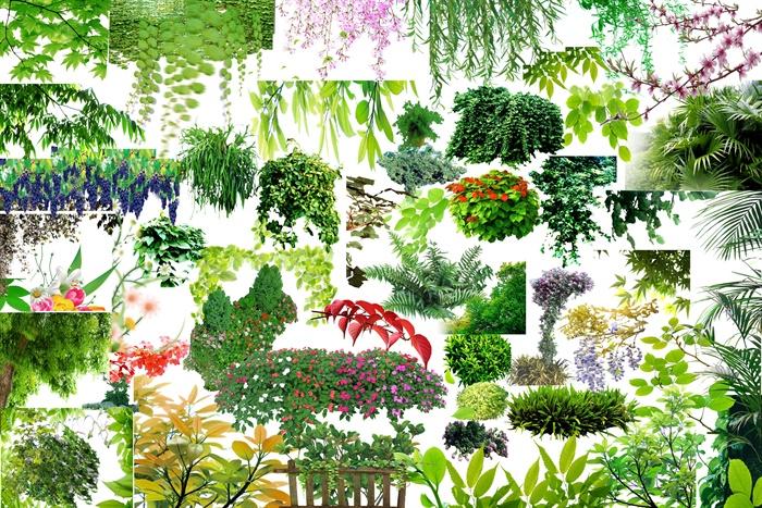 多款园林景观藤条类植物素材psd格式[原创]