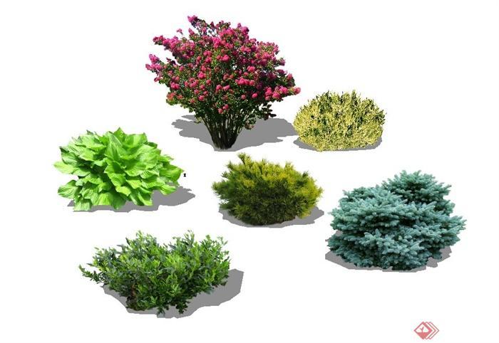灌木植物植物素材景观植物树木乔木
